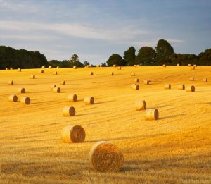 Haymaking in Sussex Downs